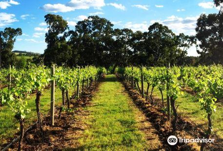 Moorooroo Park Vineyards