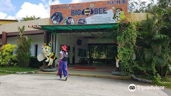Big Bee Farm3