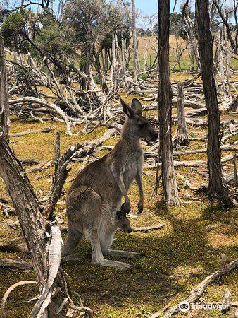 Phillip Island Wildlife Park1