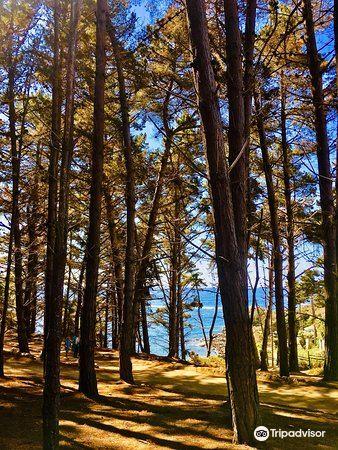 Playa El Canelillo2