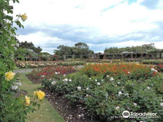 Southsea Rose Garden1
