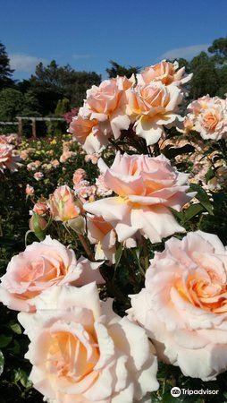 Southsea Rose Garden2