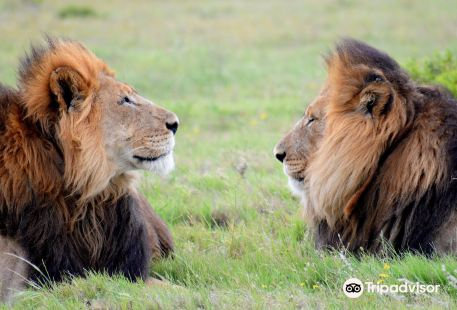 Kakuli Safaris