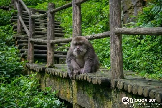 Emei Mountain Guanling Forest Hot Spring4
