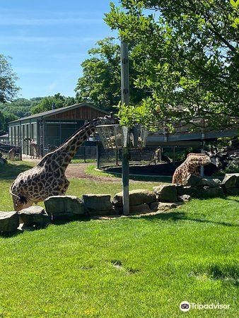 克利夫蘭動物園1