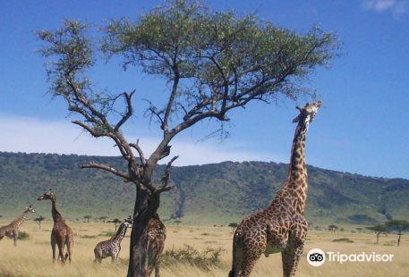 Africa Unadorned Safaris