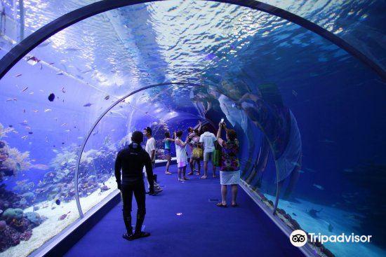 Underwater Observatory Marine Park4