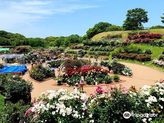 Green Park2
