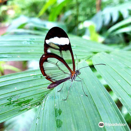 Butterfly Conservatory3