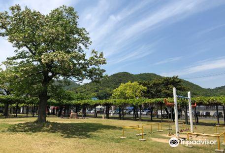 Shibukawa Park Fujidana