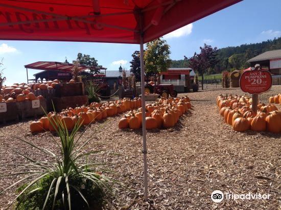 Springridge Farm3