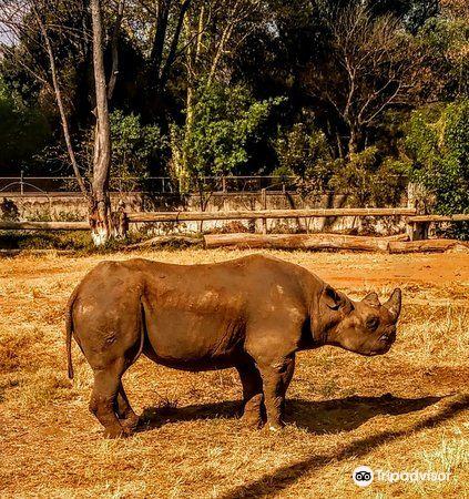 普利托裡亞動物園3