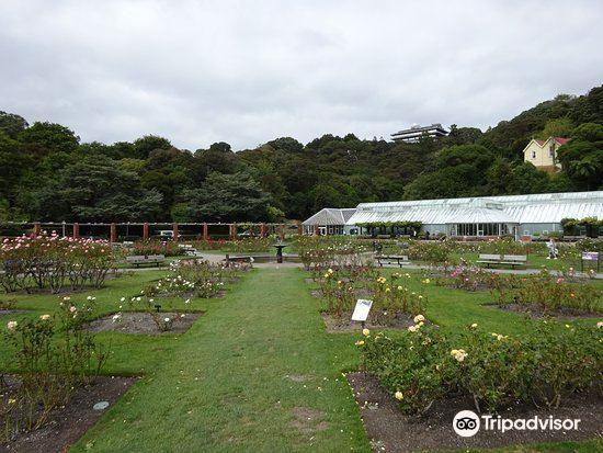 Lady Norwood Rose Garden3