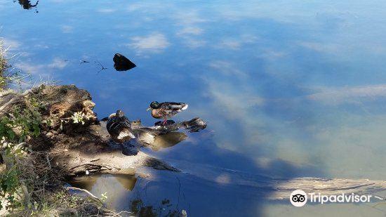 Folsom Lake State Recreation Area4