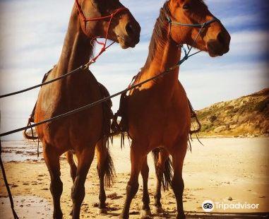Port Willunga Beach Rides