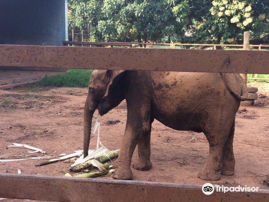Kumasi Zoo1