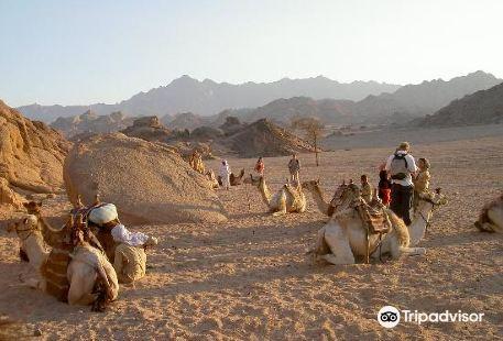 Eastern (Arabian) Desert