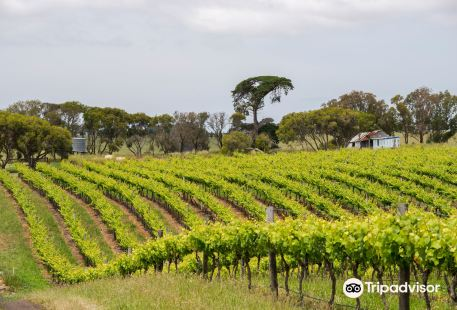 Scotchmans Hill Winery and Cellar Door