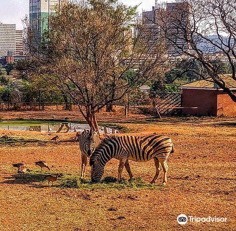 普利托裡亞動物園4
