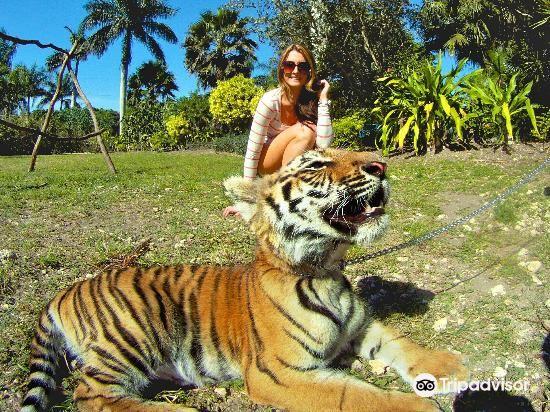 Zoological Wildlife Foundation2