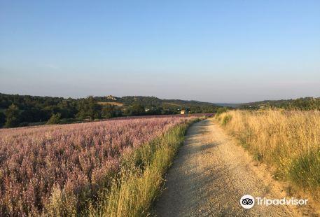 Aeronefs et aérostats de Provence
