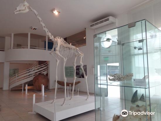 Museo de Ciencias Naturales y Antropológicas Juan Cornelio Moyano4