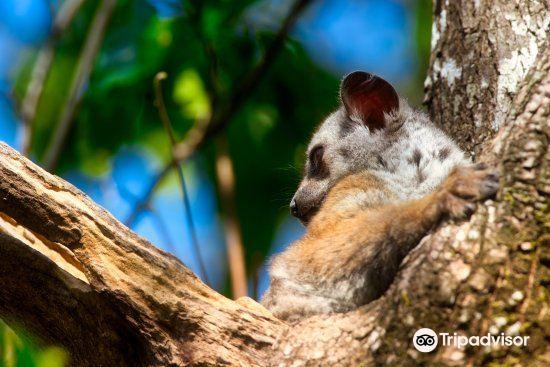 Kirindy Forest Morondava Madagascar