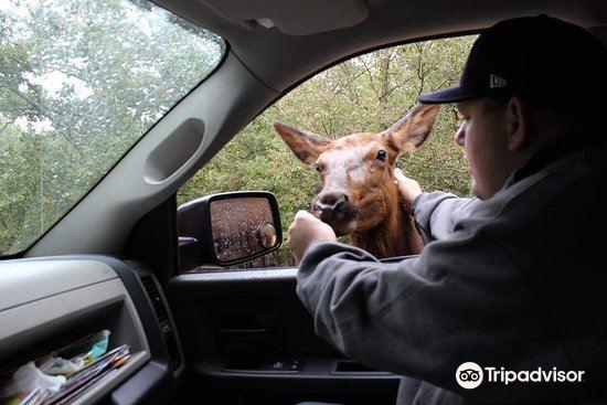 Wild Animal Safari2