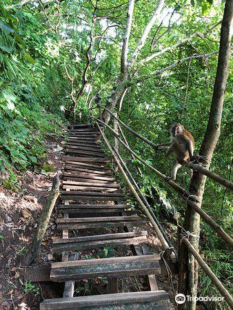 Monkey Trail4