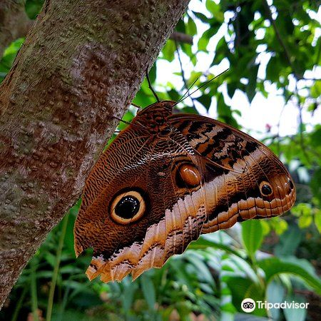 Butterfly Conservatory1