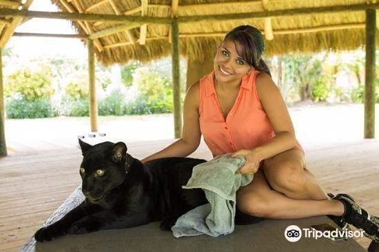 Zoological Wildlife Foundation4