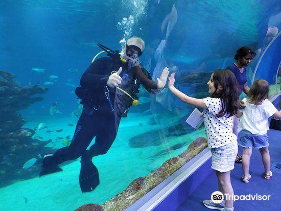 Underwater Observatory Marine Park2