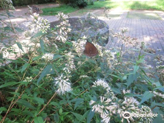 일월담 나비 공원3