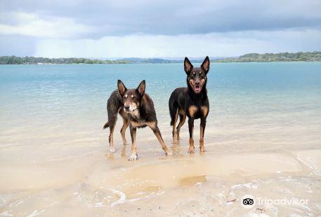 North Shore Dog Beach