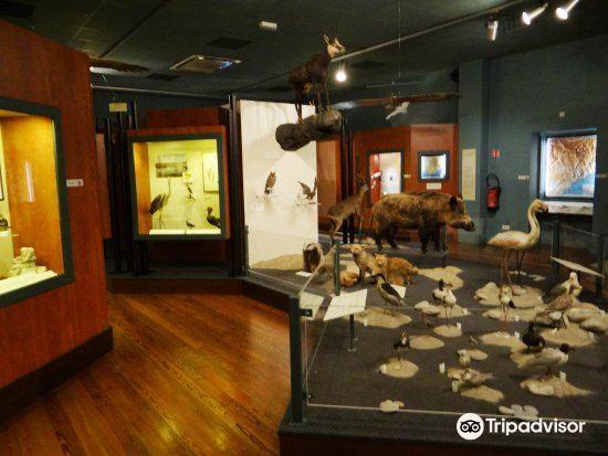Museum d'Histoire Naturelle3