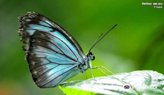 Jumalon Butterfly Sanctuary3