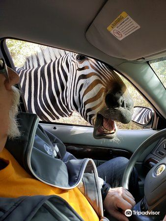 Wild Animal Safari3