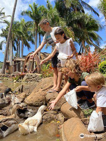 Maui Tropical Plantation1