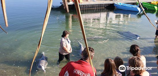 Barnacles Dolphin Centre2