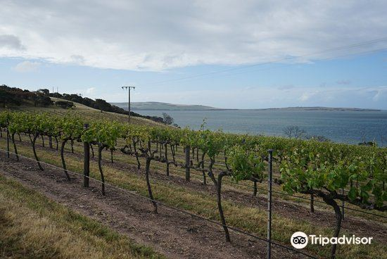 Bay of Shoals Winery4