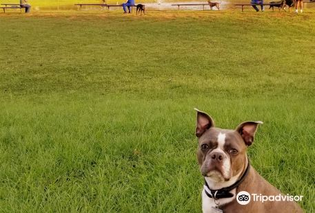 Shreveport Dog Park
