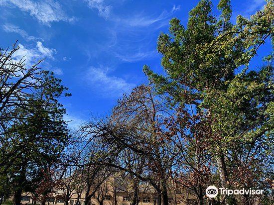 Rosalind Park3