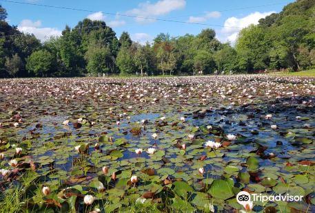 Laguna de los Lotos