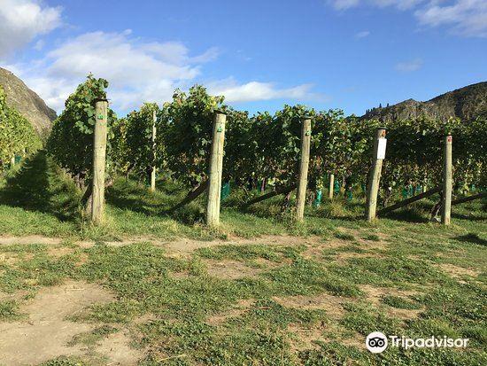 Gibbston Valley Winery3