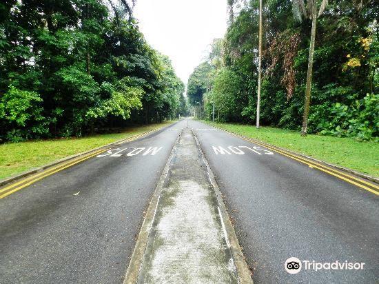 Bukit Batok Nature Park1