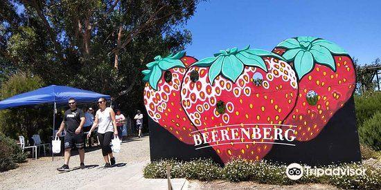 貝倫伯格草莓農場2