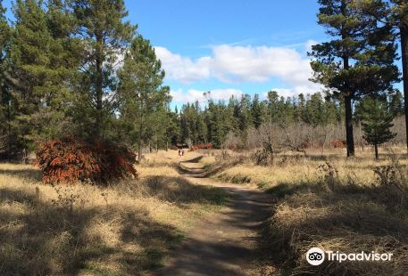Armidale Pine Forest