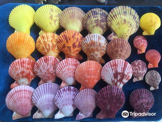 Sea Shell Collection by Argonauta Boracay4