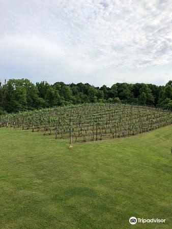 Shade Winery1