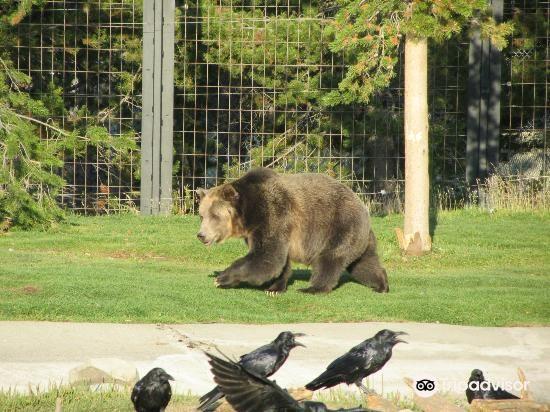 灰熊與狼保護中心2
